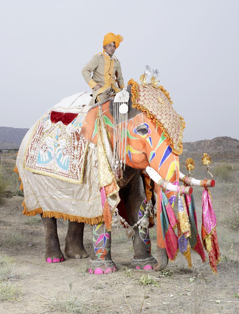 charles_freger_painted_elephant_005