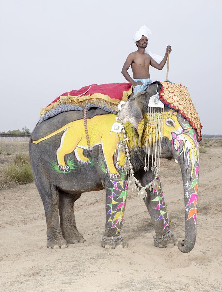 charles_freger_painted_elephant_006