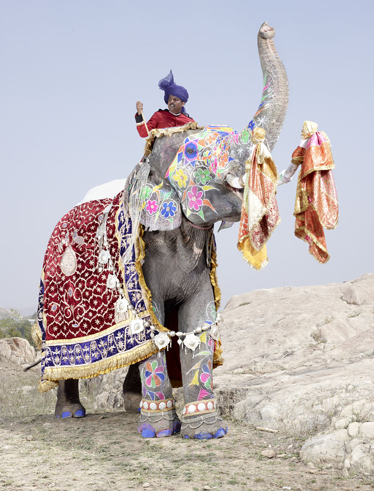 charles_freger_painted_elephant_008