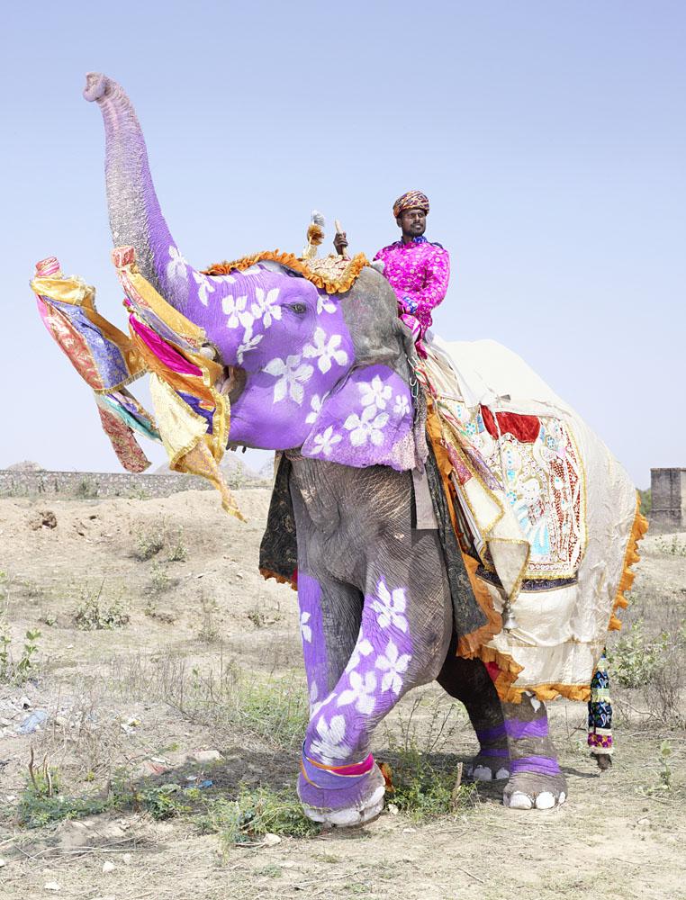 Painted Elephants Photography Painted Elephants 2013