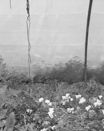 flowershyeres