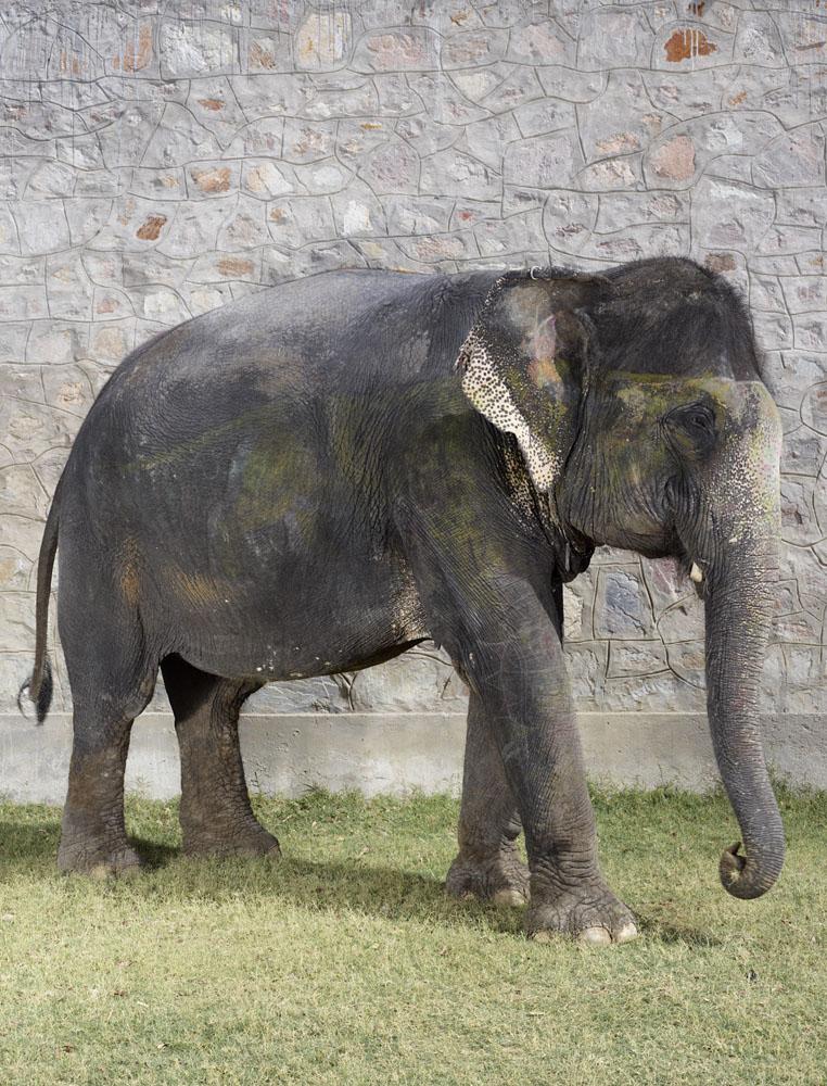 charles_freger_painted_elephant_021
